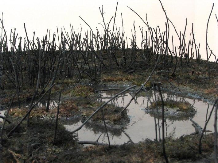 Landscape Section: Marsh