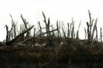 Landscape Section: Swamp