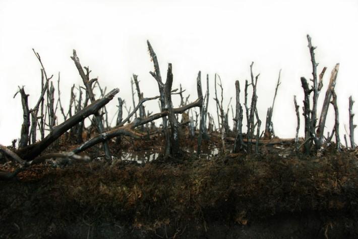 Landscape Section: Swamp