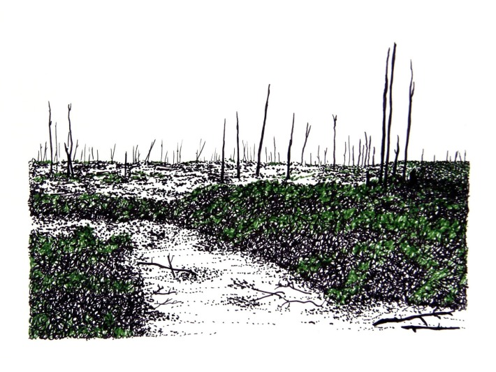 Swamp/Marsh Landscape No. 1