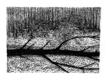 Swamp/Marsh Landscape No. 3