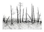 Swamp/Marsh Landscape No. 4
