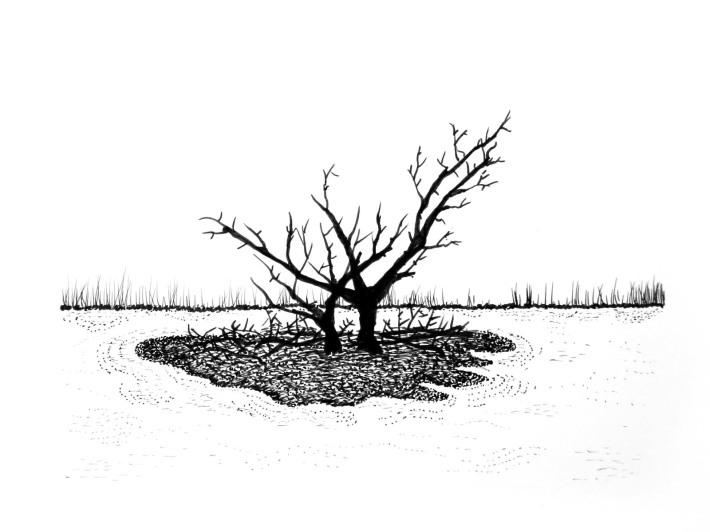 Swamp/Marsh Landscape No. 6