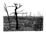 Swamp/Marsh Landscape No. 7