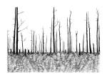 Swamp/Marsh Landscape No. 8