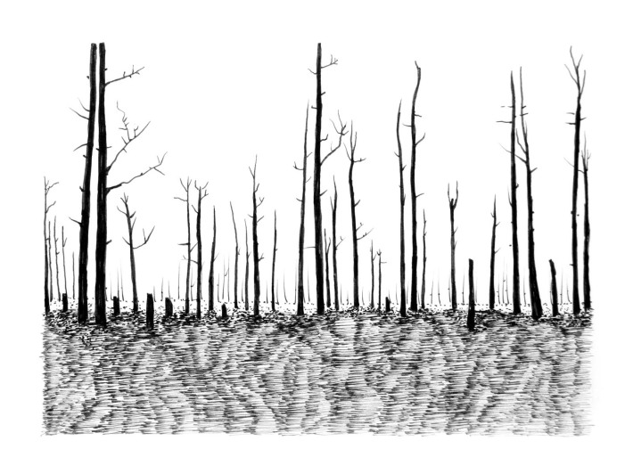 Swamp/Marsh Landscape No. 8