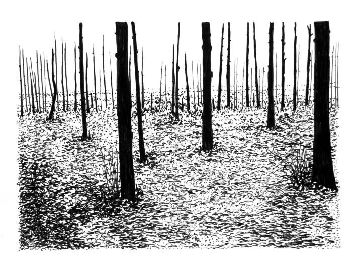 Swamp/Marsh Landscape No. 10