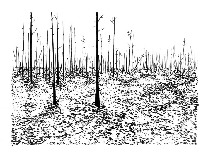 Swamp/Marsh Landscape No. 11