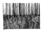Swamp/Marsh Landscape No. 12