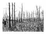 Swamp/Marsh Landscape No. 13