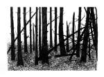 Swamp/Marsh Landscape No. 15