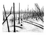 Swamp/Marsh Landscape No. 17