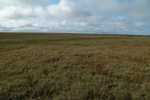 View of vast Permafrost, High Arctic, Utqiagvik region, AK