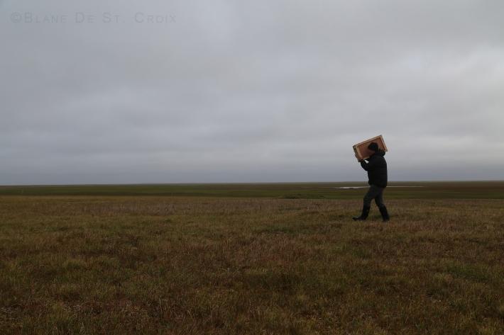 Artist in Permafrost carrying sculpting crate for plein air, Arctic Ocean Coast, High Arctic, Utqiagvik region, AK
